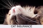 cheap-pet-cat-dog-insurance-in-spain