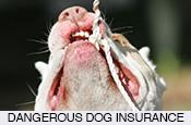 cheap-pet-dog-cat-horse-insurance-in-spain-pet-healthcare