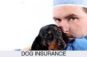 pet-medical-healthcare-insurance-cheap-spain