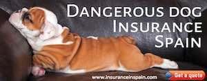 dangerous dog list in spain dangerous dog insurance in spain
