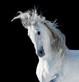Horse, pony and Donkey insurance in Spain, Spanish horse insurance, www.insuranceinspain.com