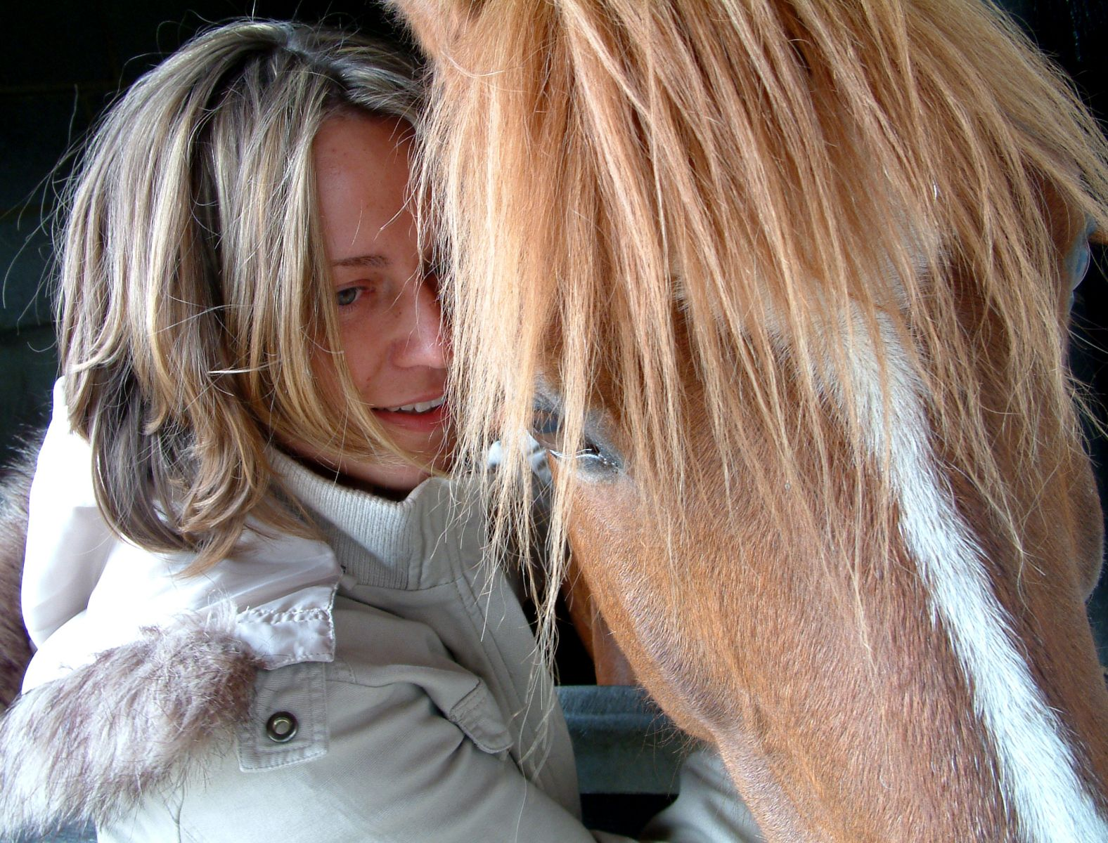 Horse and pony insurance in Spain, Spanish horse insurance, www.insuranceinspain.com