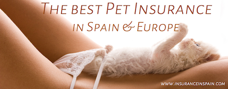 pet insurance in spain and europe cheap policies in english cat dog petplan