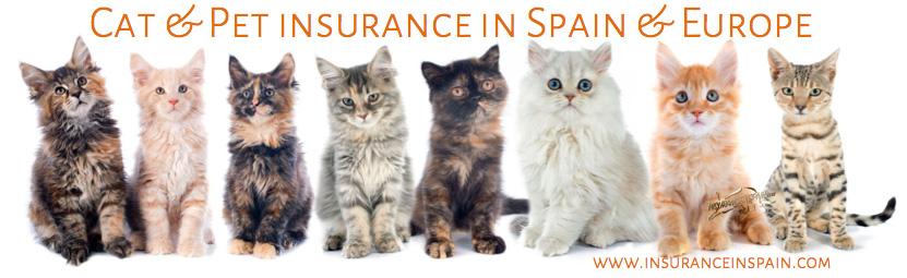 cat insurance in spain pet insurance pet plans veterinary insurance