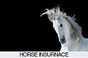 horse-rider-insurance-pony-horses-stables
