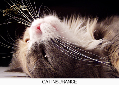 insurance-in-spain-cat-insurance-pet-insure-policy-healthcare-cheap-costa-blanca-spain