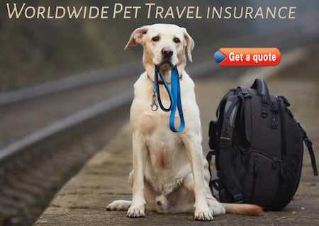 pet travel insurance for pet travel anywhere in the world