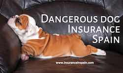 dangerous dog insurance in spain dangerous dog list in spain