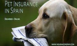 pet insurance spain cat dog puppy kitten pet plan insurance