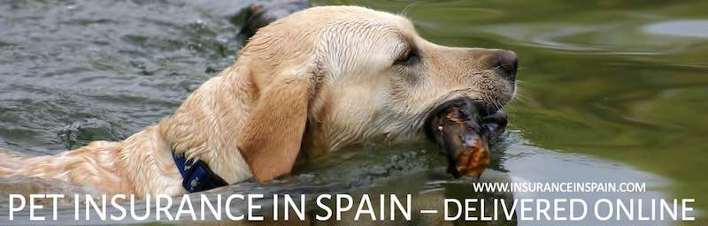 dog-swimming-in-river-delivering-pet-insurance