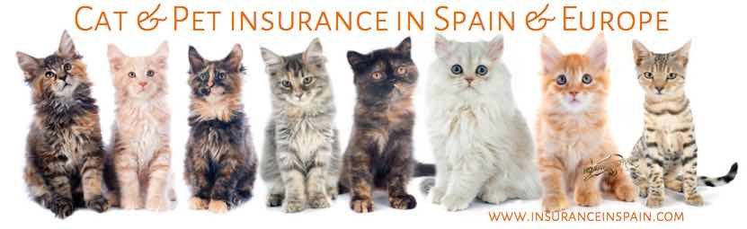 CAT INSURANCE IN SPAIN IN ENGLISH DELIVERED ONLINE