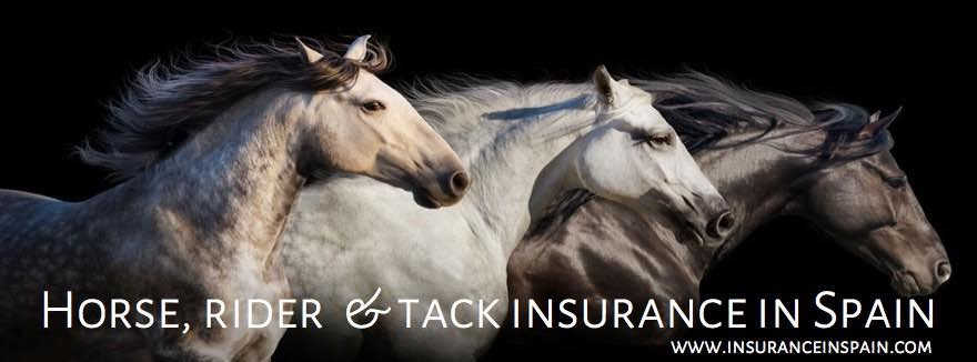 horse rider tack and veterinary insurance in spain for hoses, ponies and donkeys